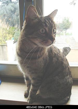 tutti i Vostri gatti  qui-dsc01250.jpg