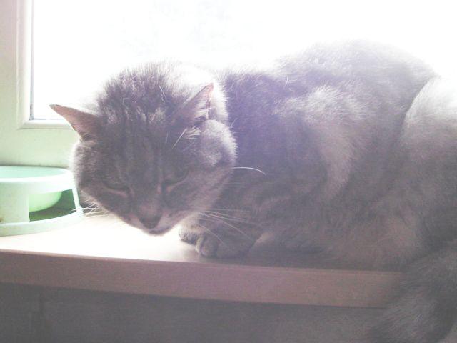 tutti i Vostri gatti  qui-dsc01262.jpg