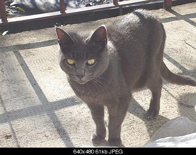 tutti i Vostri gatti  qui-dsc01263.jpg