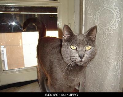 tutti i Vostri gatti  qui-dsc01273.jpg