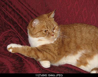 tutti i Vostri gatti  qui-img_1021.jpg
