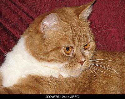 tutti i Vostri gatti  qui-img_1023.jpg