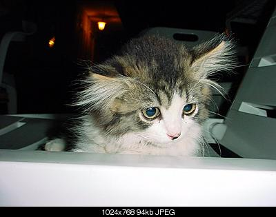 tutti i Vostri gatti  qui-asky.jpg