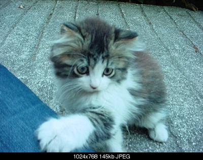 tutti i Vostri gatti  qui-dsc00521.jpg