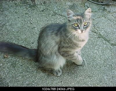 tutti i Vostri gatti  qui-dsc00893.jpg