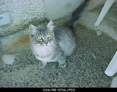 tutti i Vostri gatti  qui-dsc00897.jpg