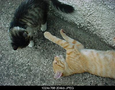 tutti i Vostri gatti  qui-dsc01437.jpg