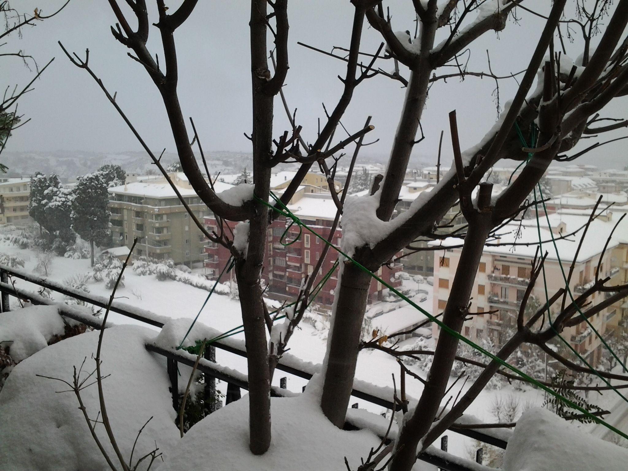 neve di questi giorni (colline adriatiche-Abruzzo)-foto3247.jpg