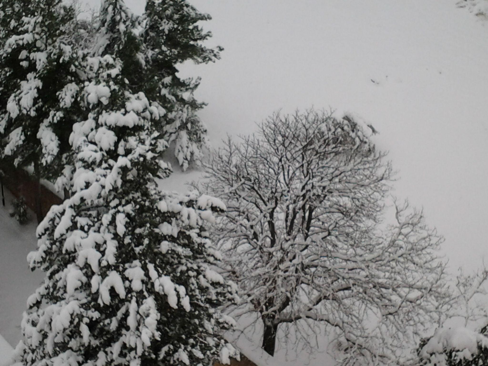 neve di questi giorni (colline adriatiche-Abruzzo)-foto3253.jpg