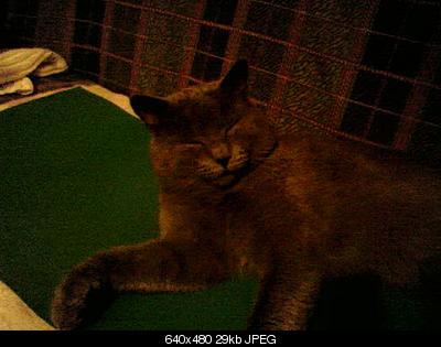 tutti i Vostri gatti  qui-photo-0099.jpg