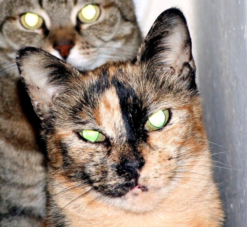 tutti i Vostri gatti  qui-dscf0008.jpg