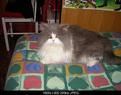 tutti i Vostri gatti  qui-ciuffolo-serio.jpg