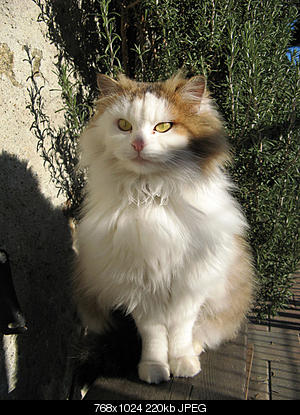 tutti i Vostri gatti  qui-06.12.24_gatti-007.jpg