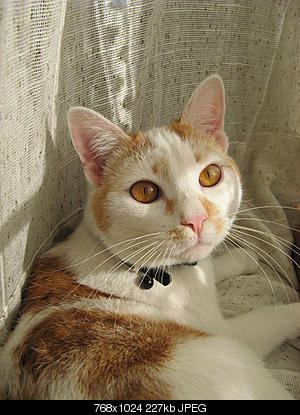 tutti i Vostri gatti  qui-06.12.24_gatti-012.jpg