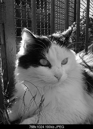 tutti i Vostri gatti  qui-06.12.24_gatti-024.jpg
