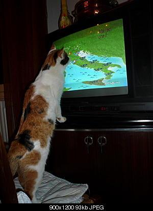 tutti i Vostri gatti  qui-immagine-474_ridimensionare_ridimensionare.jpg