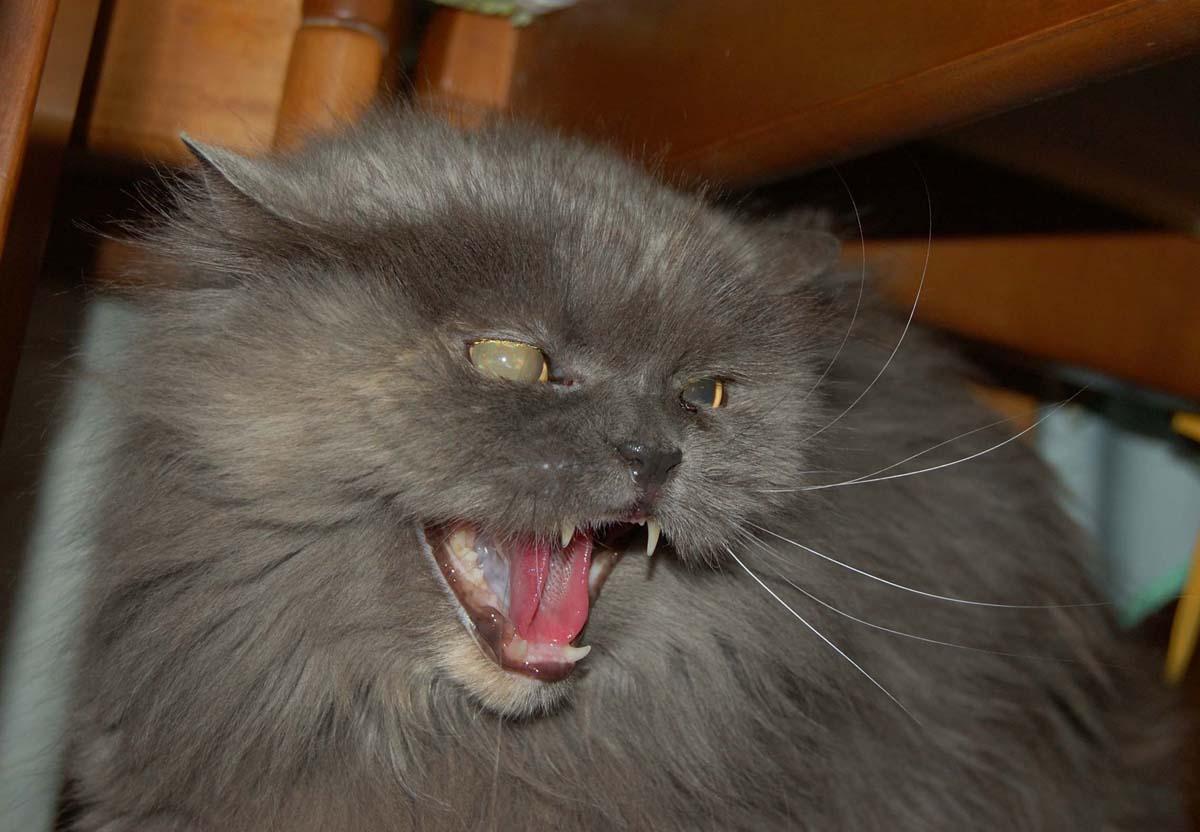 tutti i Vostri gatti  qui-chicca-2.jpg