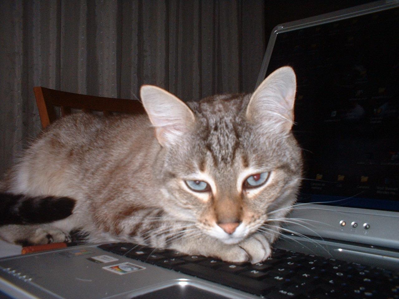 tutti i Vostri gatti  qui-dscf0002.jpg