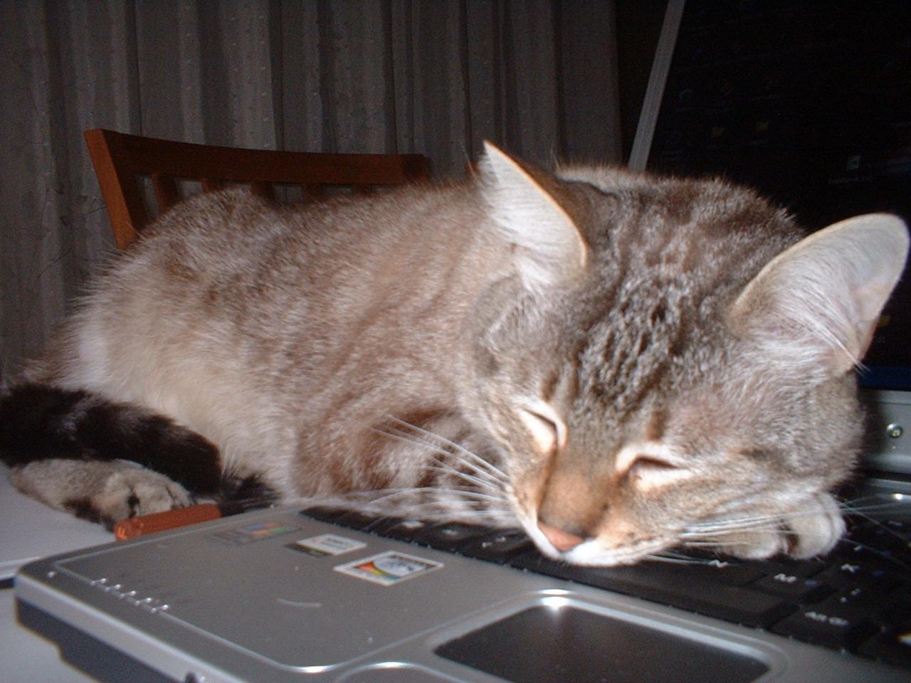 tutti i Vostri gatti  qui-dscf0004.jpg