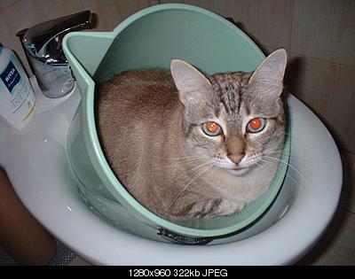 tutti i Vostri gatti  qui-dscf0010.jpg
