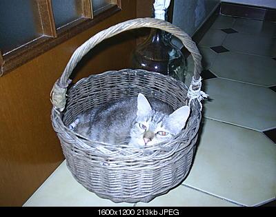 tutti i Vostri gatti  qui-pic_0060.jpg