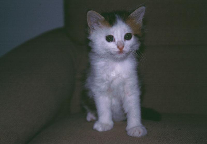 tutti i Vostri gatti  qui-rachele-silvia_240603.jpg