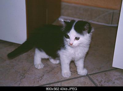 tutti i Vostri gatti  qui-tato-silvia_240603.jpg