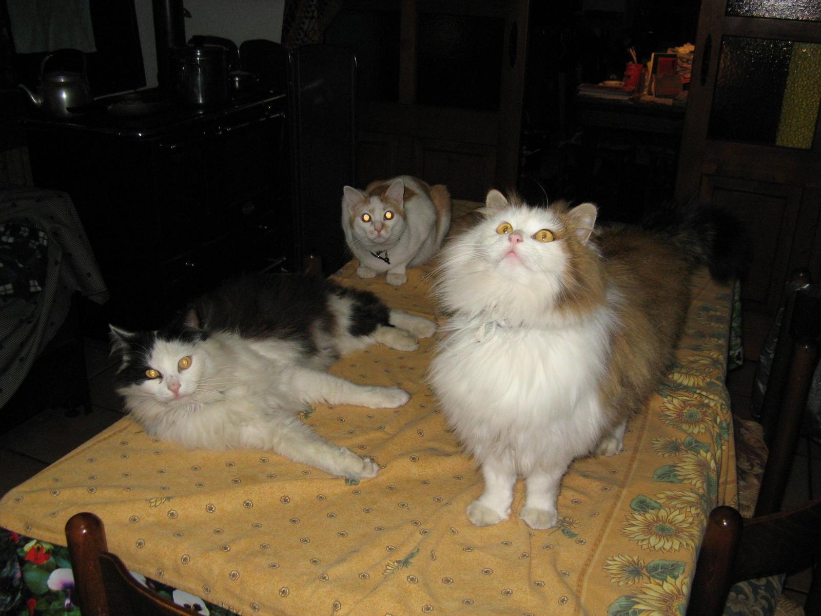 tutti i Vostri gatti  qui-07.01.01_notturne-032.jpg