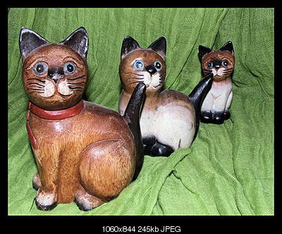 tutti i Vostri gatti  qui-gatti.jpg