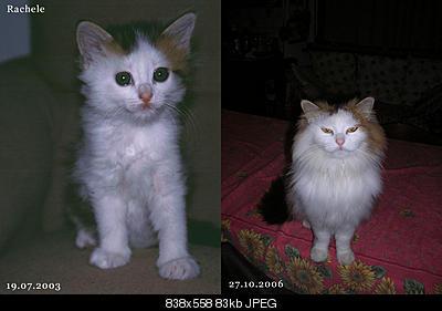 tutti i Vostri gatti  qui-rachele.jpg