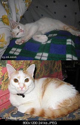 tutti i Vostri gatti  qui-yuri.jpg
