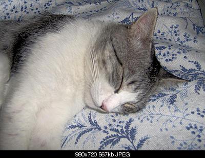 tutti i Vostri gatti  qui-foto-9.jpg
