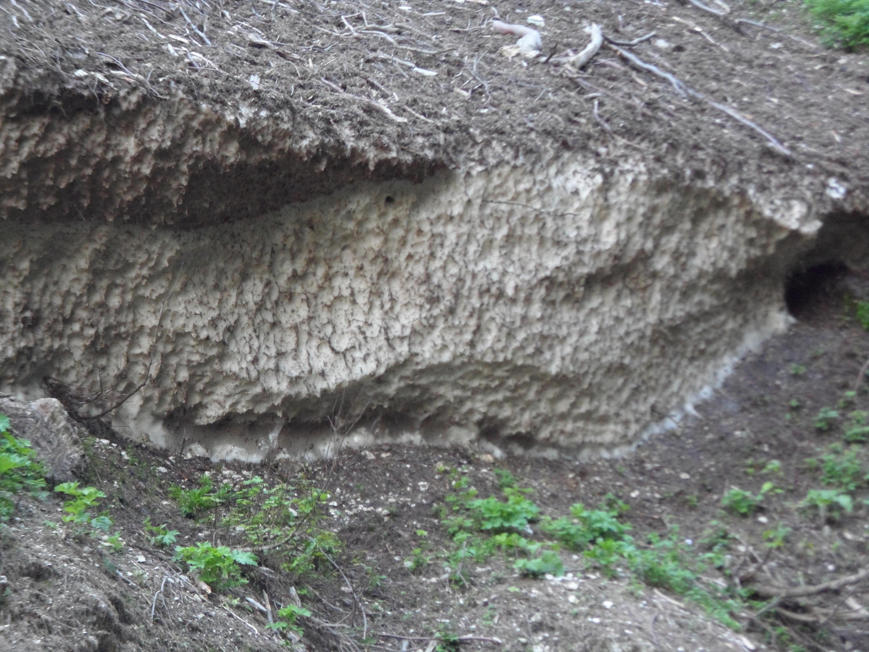 Nevai dei Sibillini-sam_4606.jpg
