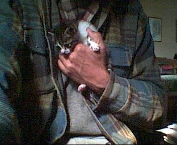 tutti i Vostri gatti  qui-il_gattino.jpg