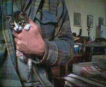 tutti i Vostri gatti  qui-il_gattino3.jpg