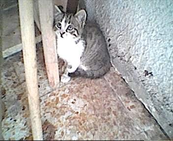tutti i Vostri gatti  qui-image-24.jpg