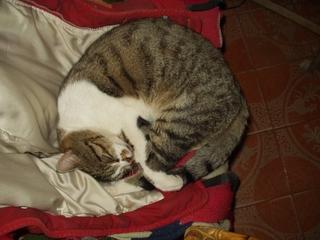 tutti i Vostri gatti  qui-p1170115.jpg
