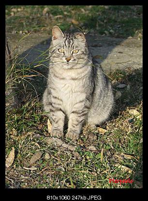 tutti i Vostri gatti  qui-dscf6978.jpg
