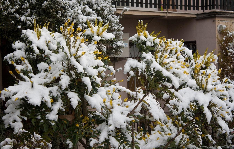 Nowcasting Friuli Venezia Giulia - Veneto Orientale INVERNO 2015/16-b.jpg