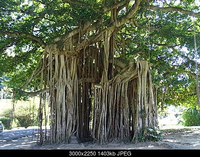 Antille Gennaio 2015-dsc02431.jpg