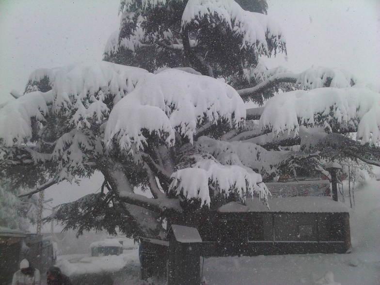 Catena del Libano - Situazione neve attraverso le stagioni-img00356-20101212-1330-1-.jpg