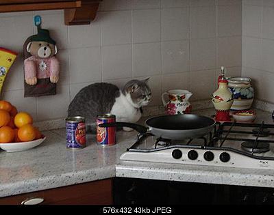 tutti i Vostri gatti  qui-.jpg