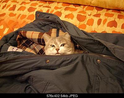 tutti i Vostri gatti  qui-b.jpg