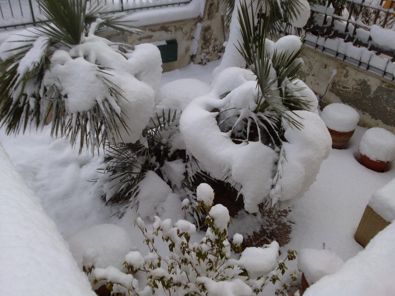 Gelo e neve d'Epifania 2017_qui tutte le FOTO e i VIDEO-cam00938.jpg