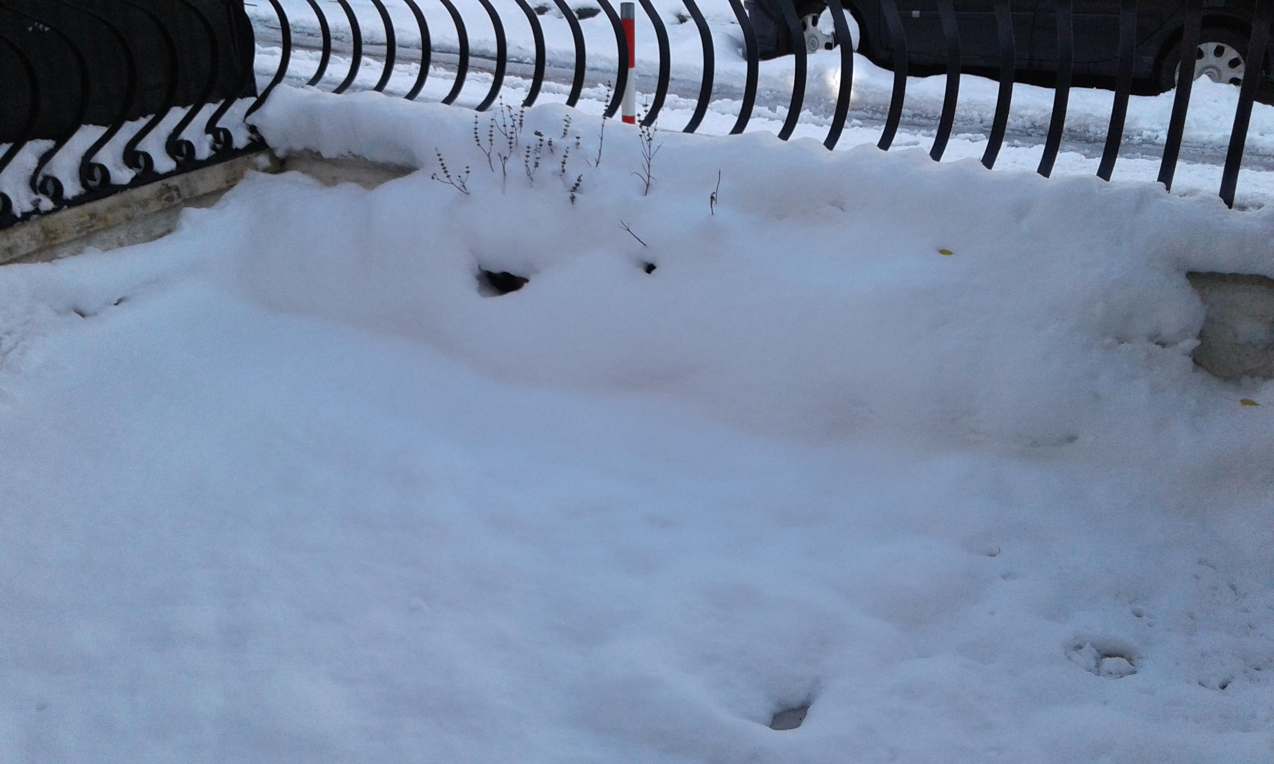 Gelo e neve d'Epifania 2017_qui tutte le FOTO e i VIDEO-20170108_142937.jpg