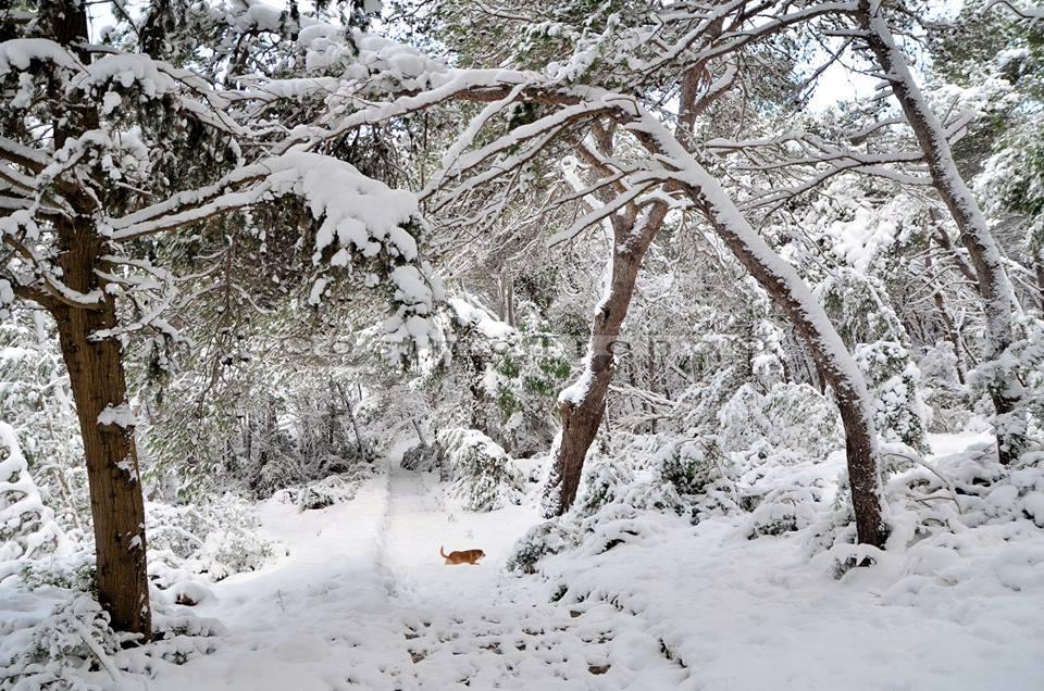 Gelo e neve d'Epifania 2017_qui tutte le FOTO e i VIDEO-15442118_10209739236775322_4194166126510288383_n.jpg