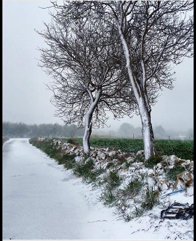 Gelo e neve d'Epifania 2017_qui tutte le FOTO e i VIDEO-campi.jpg
