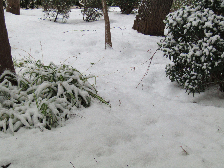 Gelo e neve d'Epifania 2017_qui tutte le FOTO e i VIDEO-img_0396.jpg