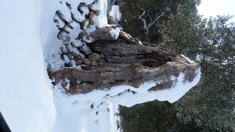 Gelo e neve d'Epifania 2017_qui tutte le FOTO e i VIDEO-p1060302.jpg