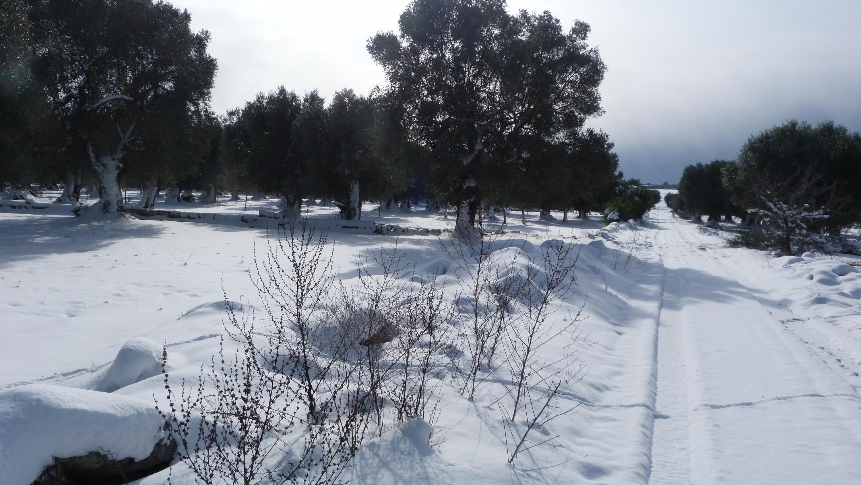 Gelo e neve d'Epifania 2017_qui tutte le FOTO e i VIDEO-p1060310.jpg